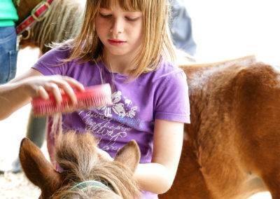 Ponys füttern, pflegen und reiten auf dem Tiggeshof in Ainkhausen. Der Bio-, Lern- und Erlebnisbauernhof im Sauerland.