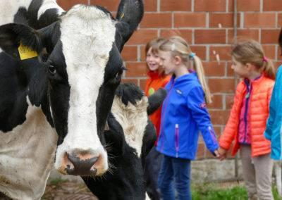 Kühe hautnah erleben auf dem Tiggeshof, dem Bio-, Lern- und Erlebnisbauernhof im Sauerland